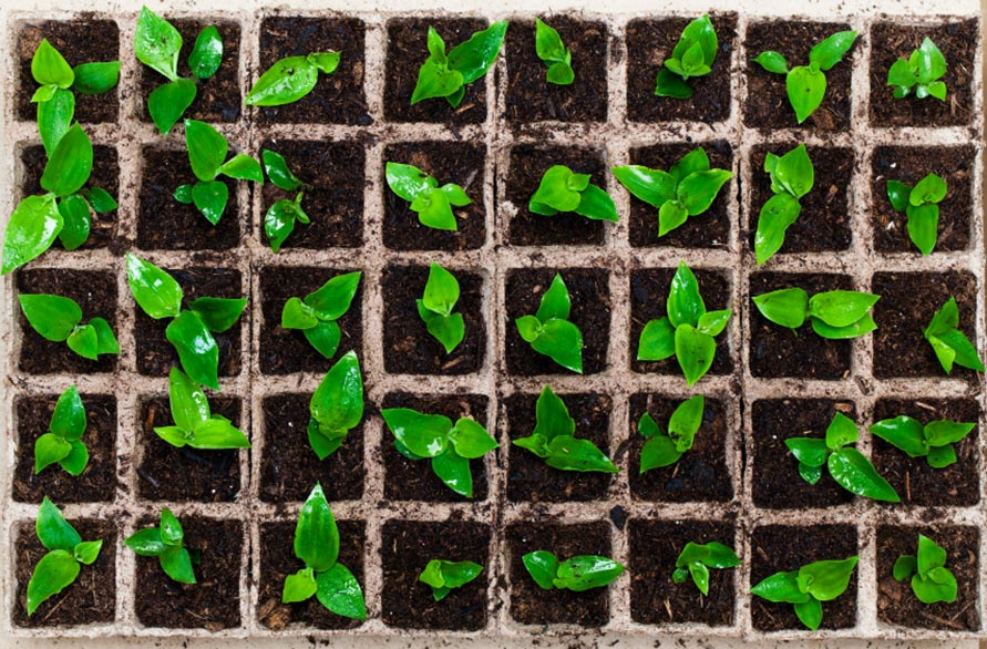 Image of plant seedlings at wigan growing network