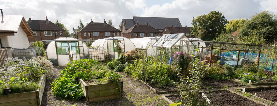 Polytunnels at Worsley Hall Allotments