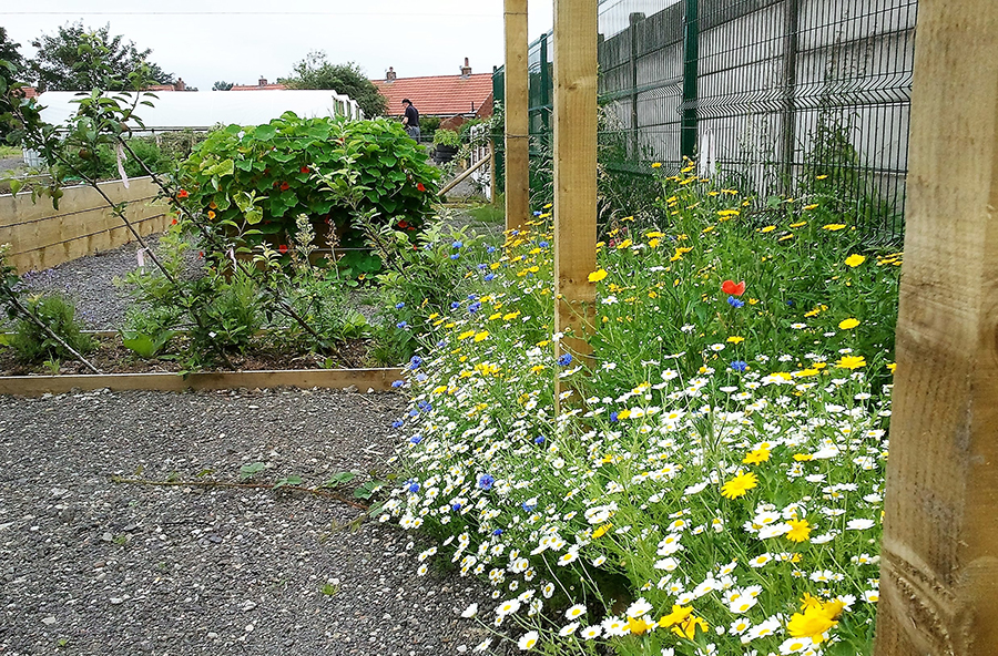Worsley Hall Allotments view of wildflower planting