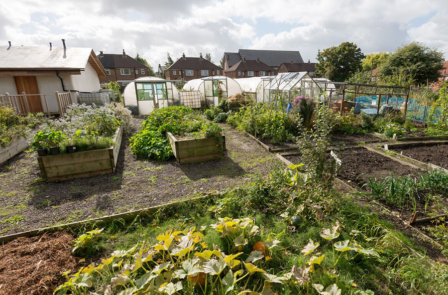Worsley Hall Allotments view of raised beds